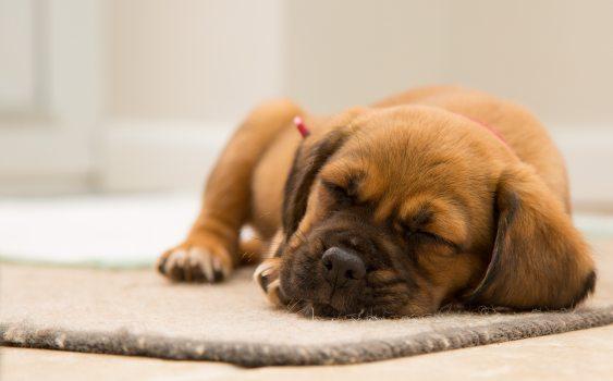 animal-cute-dog-97863